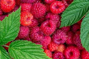 Ripe raspberry with green leaves