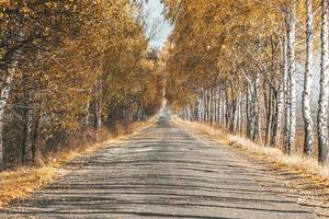 Road with autumn landscape of trees and yellow leaves (Flip 2019)