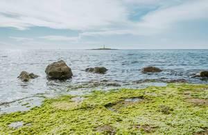 Rock covered in green algae