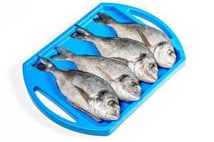 Rohe Dorados: Fische vor der Zubereitung auf einem blauen Tablett, aus der Sicht von oben