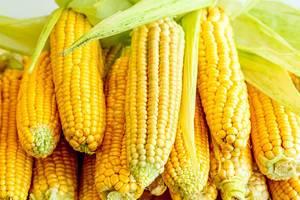 Rohe, süße Maiskolben, gestapelt