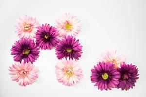 Rosa und pinke Blumen formen den Buchstaben M und einen Punkt (M.)