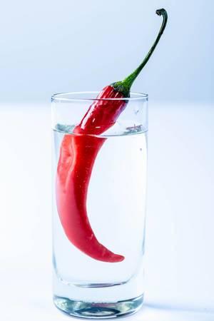 Rote frische Chili in mit Wodka gefülltem Shot-Glas vor weißem Hintergrund
