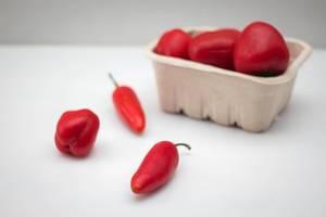 Rote Paprika auf weißem Hintergrund