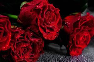 Rote Rosen mit Wassertropfen auf den Blütenblättern auf schwarzem Hintergrund