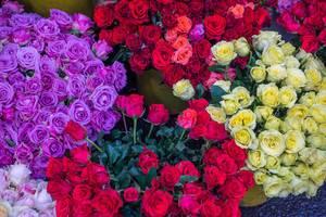 Rote und lila farbene Rosen auf dem Blumenmarkt in Ho Chi Minh City