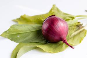 Rote Zweibel / Red Onion and Salad