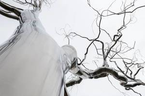 Roxy Paine Graft