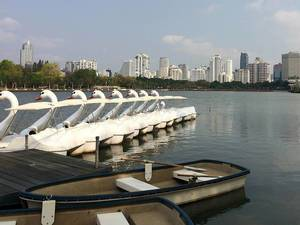 Ruderboote und Schwan-Boote zum Mieten