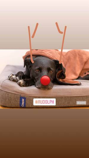 rudolph the red nosed dog reindeer