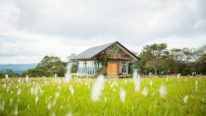 Rundum verglastes Holzhaus auf blühender Wiese