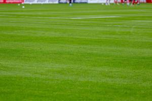 Saftig-grüner Rasen im Fußballstadion