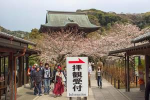 Sakura temple