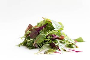 Salad mix with rucola, frisee and radicchio / Gemischter Salat