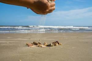 Sand rieselt auf Muscheln am Strand in Vietnam