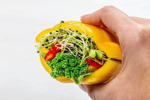 Sandwich with fresh vegetables and micro-green onions in a woman