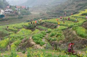 Sapa ricefield with womens in traditional clothes