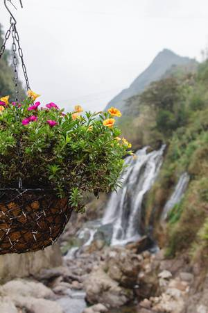 Sapa WaterFall in the background  with flower  (Flip 2019)