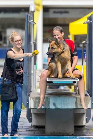 """Schäferhund """"gibt ein Interview"""""""