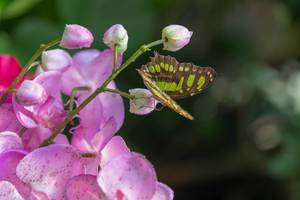 Schmetterling auf einer Orchidee im Schmetterlinghaus in Wien