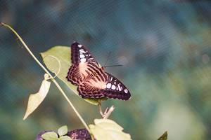 Schöner Schmetterling mit geöffneten Flügeln auf einem Blatt
