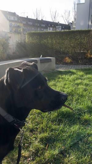 Schwarzer Hund im Garten