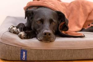 Schwarzer Hund liegt auf Hundekissen, zugedeckt von oranger Decke