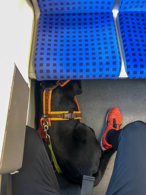 Schwarzer Hund liegt im Zug zwischen den Beinen des Besitzers unter blauem Sitz