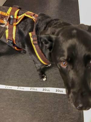 Schwarzer Hund steht auf grauer Hundedecke mit der Bezeichnung Zoll