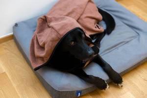 Schwarzer Labrador liegt auf Hundebett und trägt Hundebademantel aus Mikrofaser