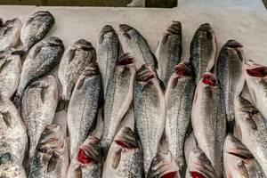 Sea bass on fish market