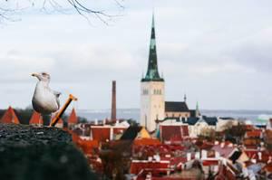 Seagull looking over City / Möwe Blick über Stadt