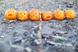 Sechs Halloween-Kürbisse auf dem Boden