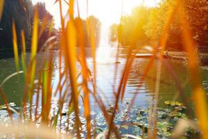 See mit Seerosen: Blick durch Grünpflanzen