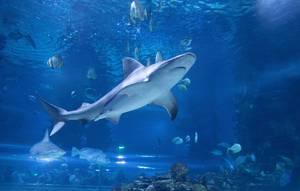 Shark in Tropicarium Budapest
