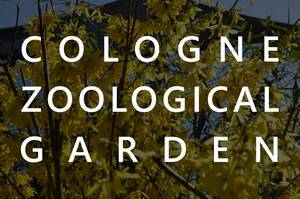 """Shrub with yellow flowers in the background of the picture title """"Cologne Zoological Garden"""""""