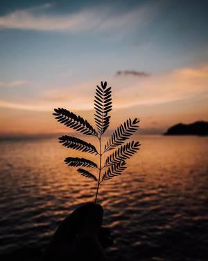 Silhouette eines kleinen Blatts bei Sonnenuntergang vor dem Meer