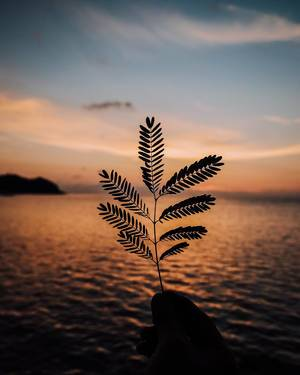 Silhouette of a small plant during sunset (Flip 2019)