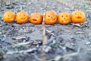 Six Halloween pumpkins on the field (Flip 2019)