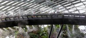 Skywalk in Cloud Forest