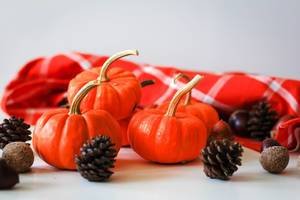 Small Pumpkins with Chestnut