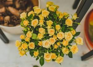 Small Yellow Roses (Flip 2019)