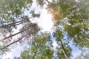 Sommertag im Wald