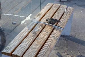 Spatz sucht auf einer Sitzbank nach Nahrung