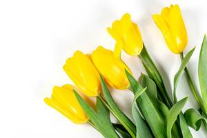 Spring bouquet of yellow tulips. Happy Mother