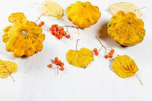 Squash, yellow leaves and Rowan berries on a white background. Autumn season concept (Flip 2019)