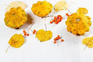 Squash, yellow leaves and Rowan berries on a white background. Autumn season concept