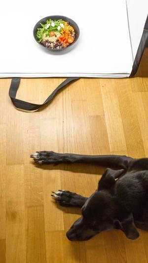 Stock Photography - Schwarzer Hund auf Parkettboden vor der Fotobox