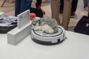 Stoffhund auf einem Staubsaugerroboter