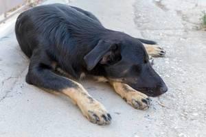Straßenhund döst im Schatten